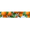 "Кухонный фартук ""Спелые мандарины"" из АБС-пластика 3000*600*1,5мм"